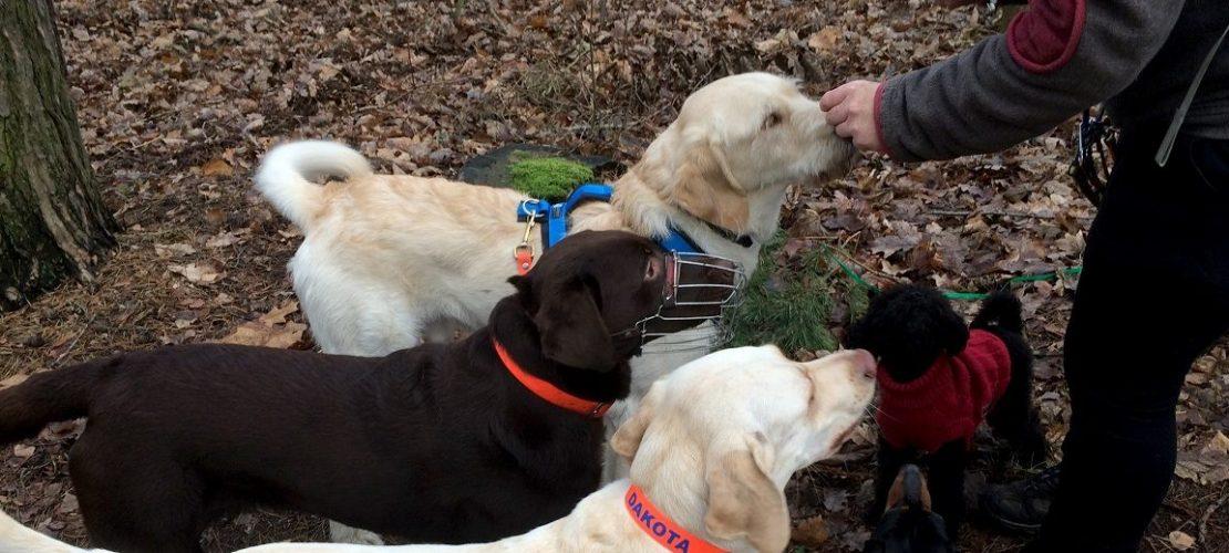 Dogwalker Nora Gohr gibt den Hunden Leckerlis.