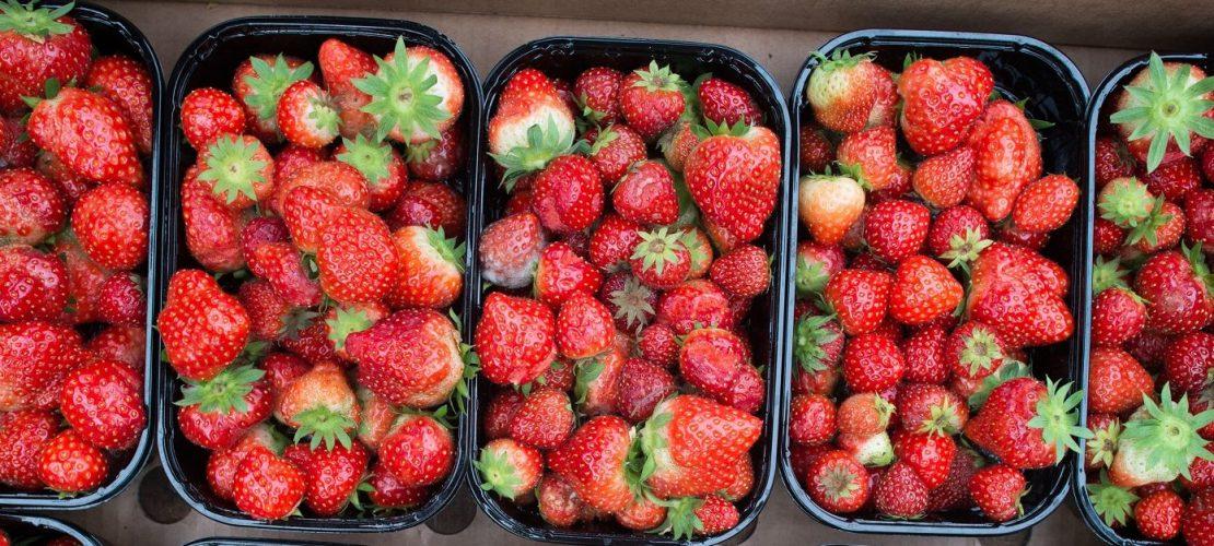 Sie schmecken wässrig, sind mit Pestiziden belasten und schaden der Umwelt: importierte Erdbeeren. .(Foto: dpa)