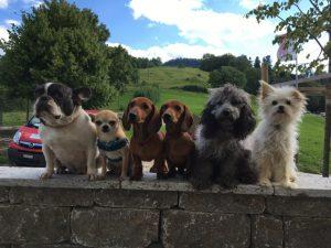 Sechs Hunde sitzen auf einer Mauer. (Foto: Tatjana Zimek)