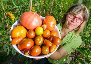 Benedicta von Branca zeigt auf ihrem Hof am Weinberg in Bornow unweit von Beeskow eine kleine Auswahl ihrer verschiedenen Tomatensorten. (Foto: dpa)