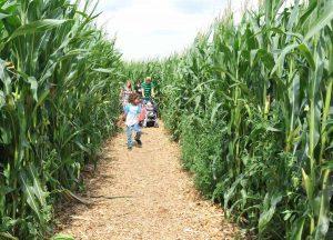 Das Maislabyrinth ist gar nicht so einfach. (Foto: Bubenheimer Spieleland)