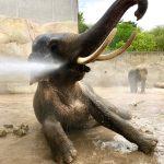 Elefant Foto: Archiv