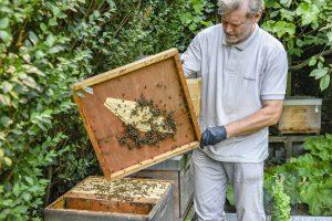 Wer Bienen hält, hat immer was zu tun. (Uwe Weiser)