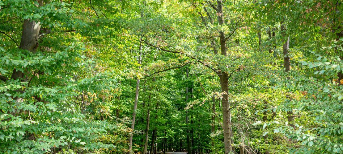 Der Wald der Zukunft