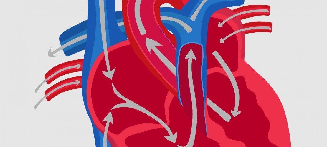 100 000 Schläge am Tag – Dein Herz