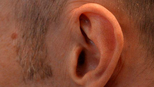 Wie das Fell einer Trommel – Das Ohr