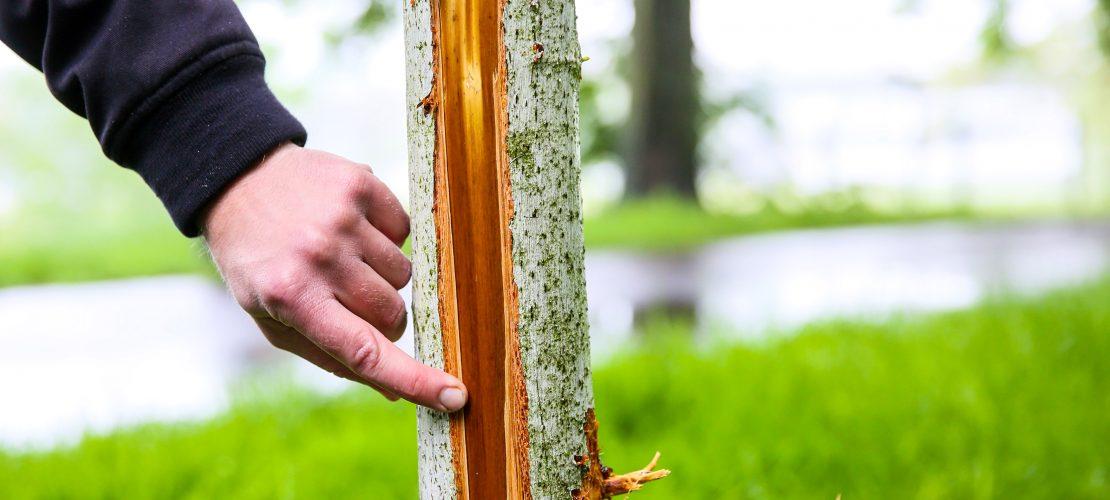 Unterwegs mit dem Baumkontrolleur