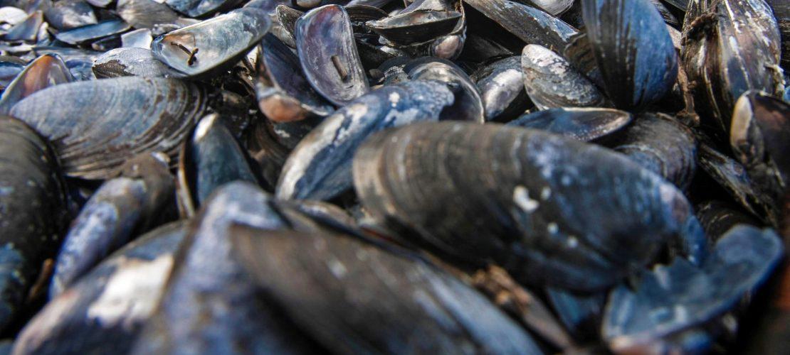 Schätze aus den Tiefen des Meers – Muscheln