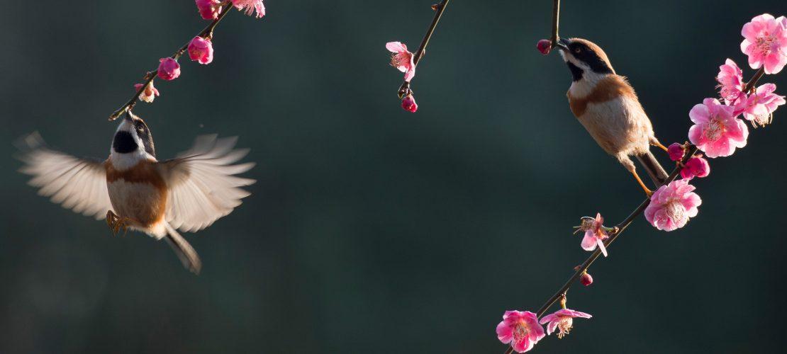 Rückwärts fliegen – Kolibris