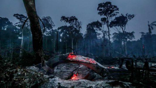 Feuer im Regenwald beeinflussen Klimawandel