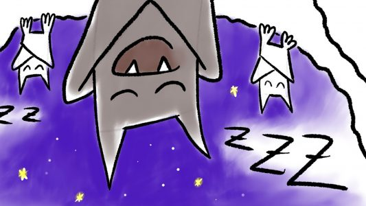Schlaft schön, Fledermäuse!