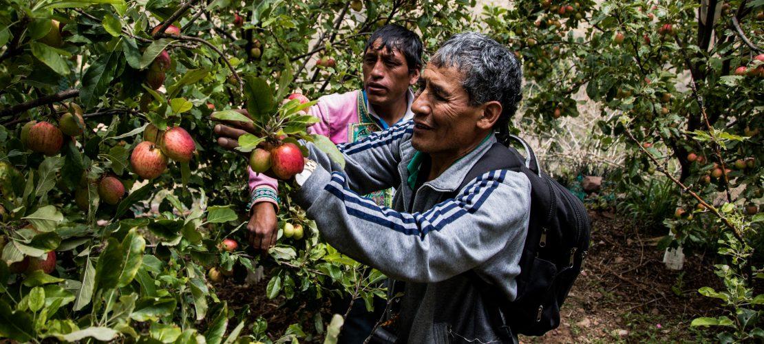 Die Äpfel haben Jhonny gerettet