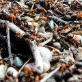 Kleine Ameise – Große Reise