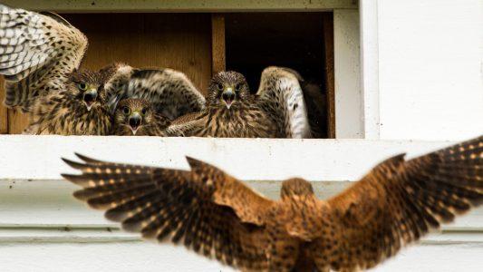 Tierische Familie