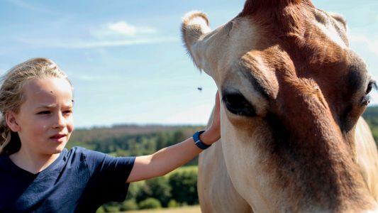 Kühe zum Kuscheln