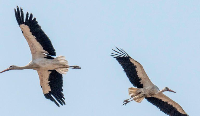 Flügelschläge Richtung Süden