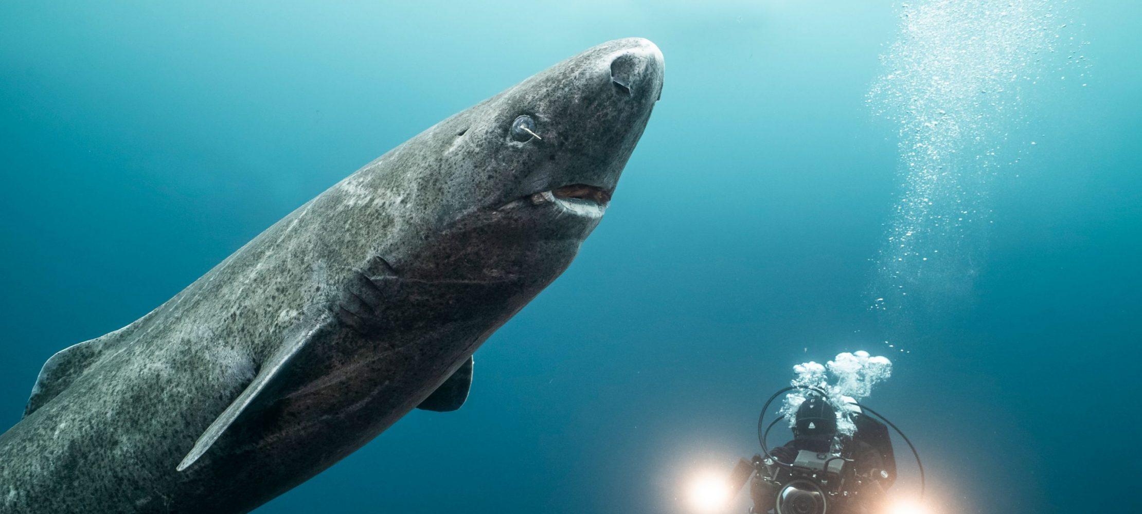 400 سال در اقیانوس منجمد شمالی