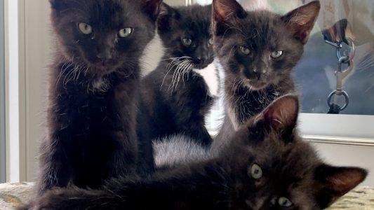 Hilfe für verwaiste Katzenkinder